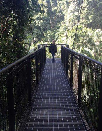 Romantic Rainforest Skywalk
