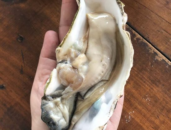 Biggest Oysters at Georges Grill Seafood & Burgers