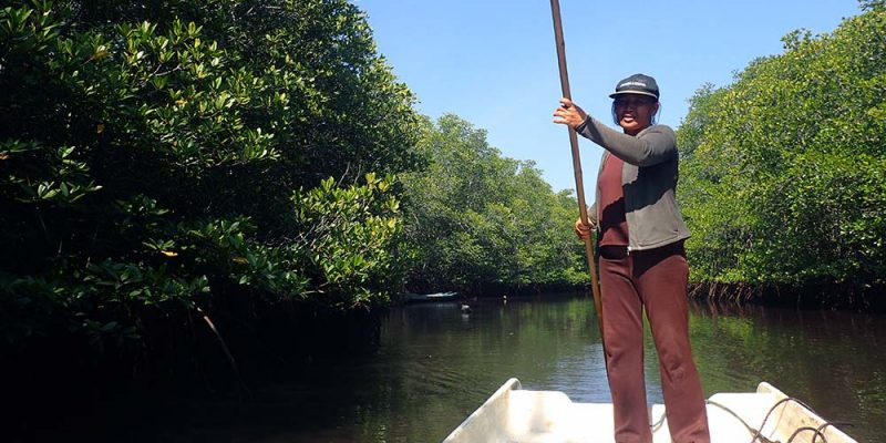 Mangrove Forest Boat Ride
