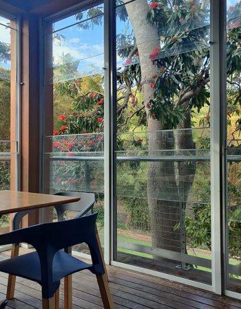 Explore Mt Coot-tha Botanic Gardens